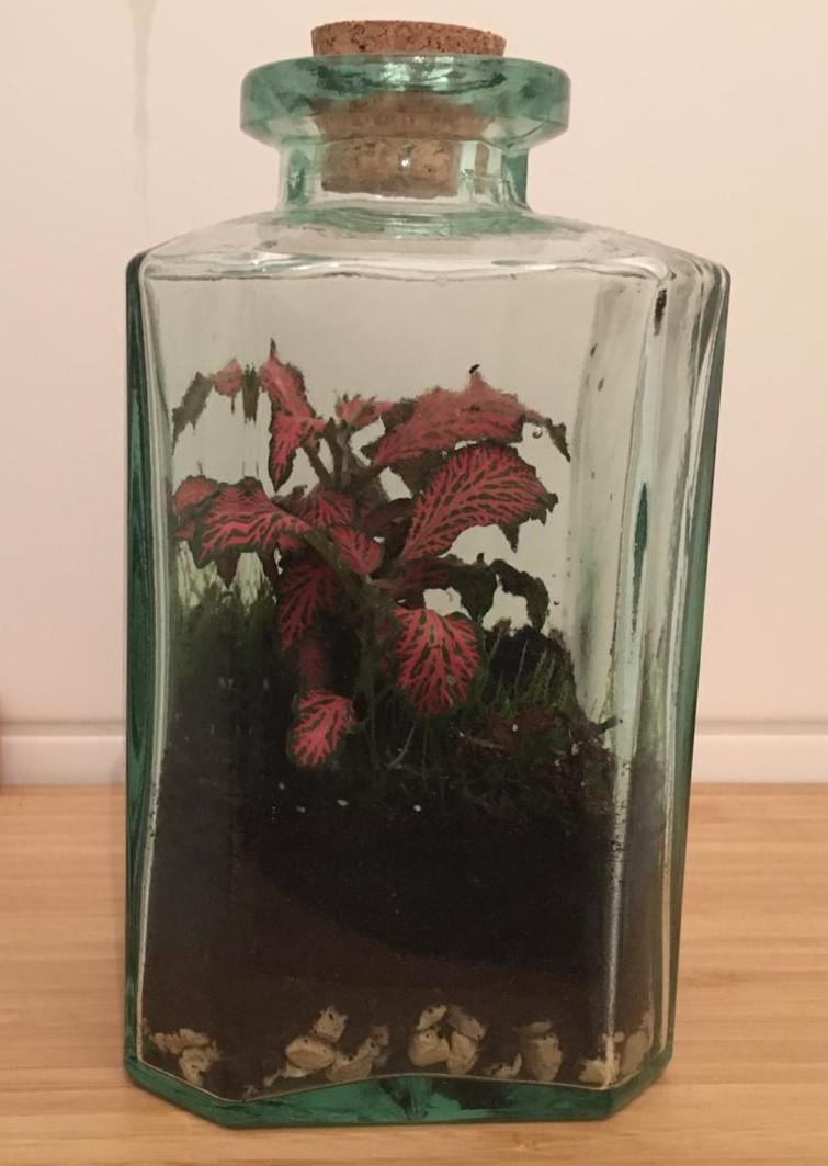 Terrarium: Pflanze in verschlossener Flasche
