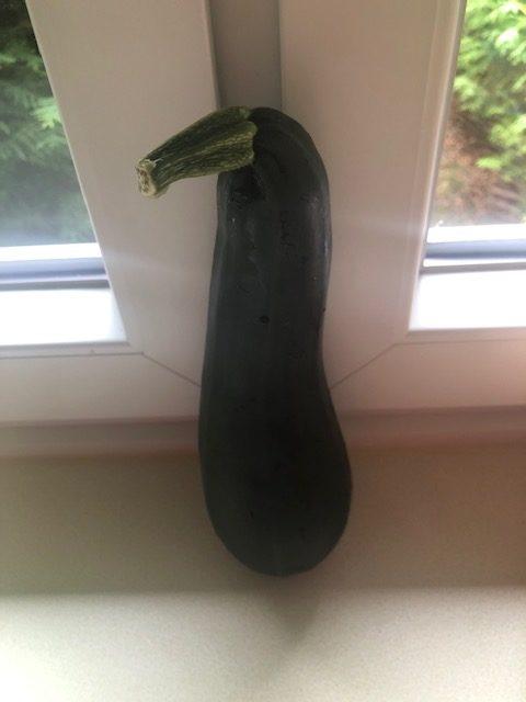 Große grüne Zucchini